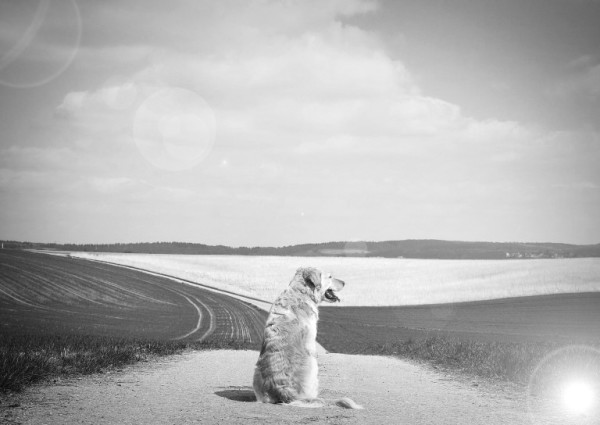 black and white photo of dog on a dirt road looking over rolling farmland