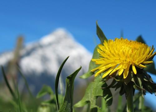 Spring Mountain Flower 2 Image
