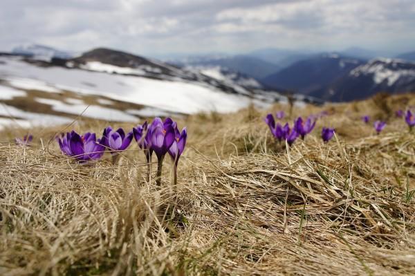 Spring Mountain Flower image