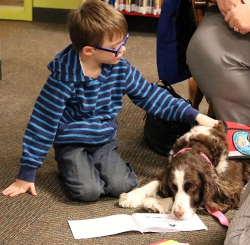 Iris the therapy dog