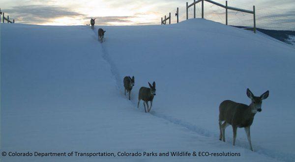 deer crossing State Highway 9