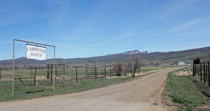 "The ""Maverick"" of Carpenter Ranch"