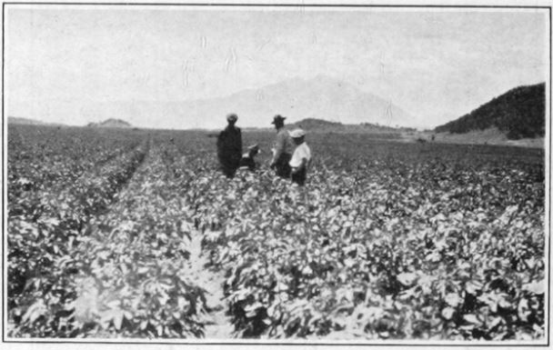 Time Machine Tuesday: The Colorado Extension