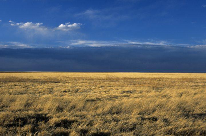 Colorado Grasslands