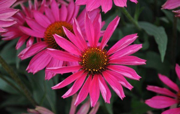 Colorado State University's Flower Trial Gardens