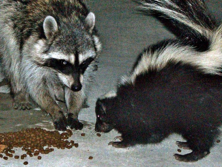 Protect Yourself, Your Pets, and Livestock from Rabies