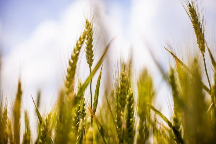 Colorado Dept. of Agriculture Photo Contest