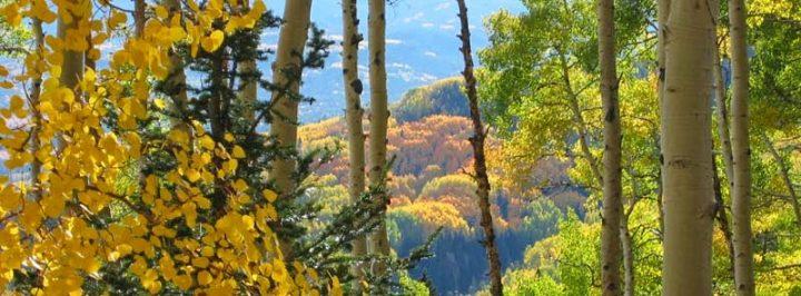 Fabulous Fall Foliage Drives