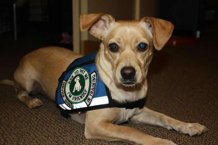 Laws Relating to Service Animals