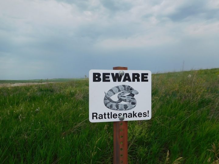 Rattlesnakes are Back – Be Cautious